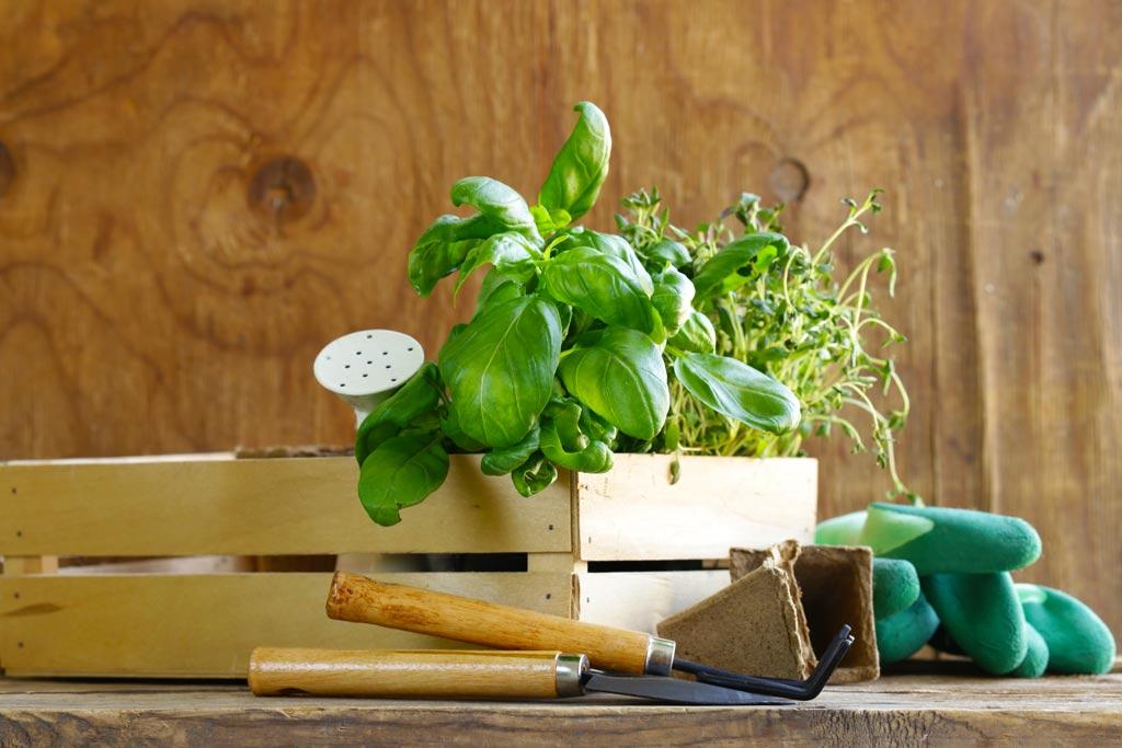 ¿Cómo hacer una mesa de cultivo para un huerto urbano?