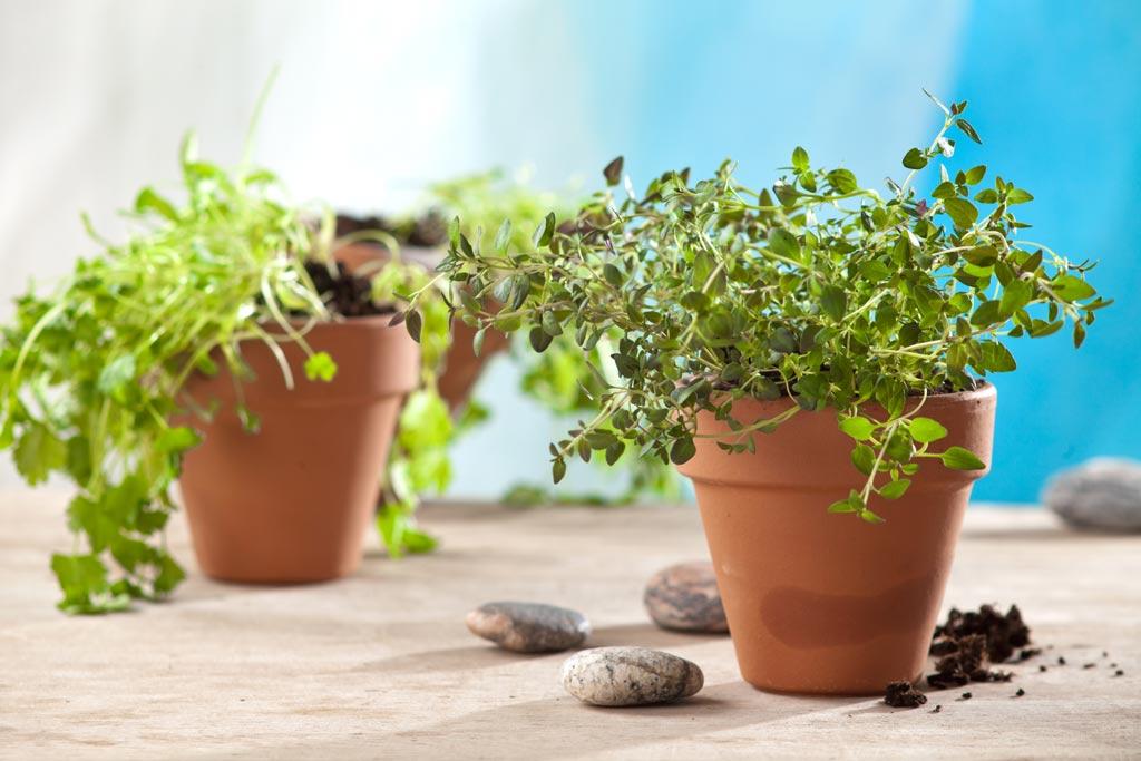 ¿Cómo regar tus plantas si te vas de fin de semana?